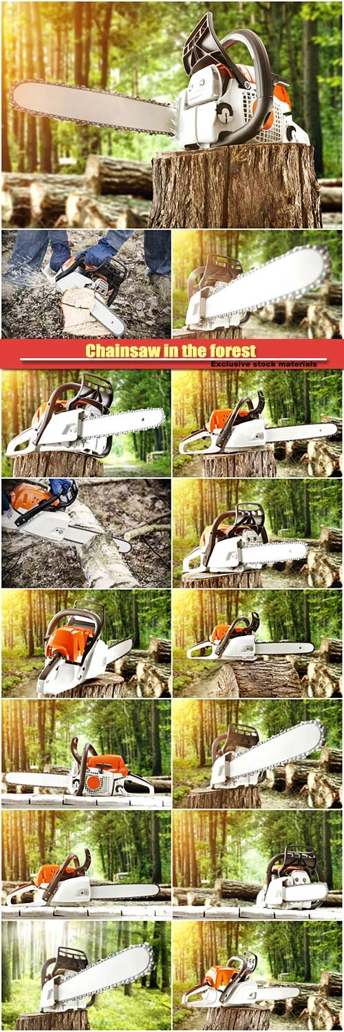 Chainsaw in the forest