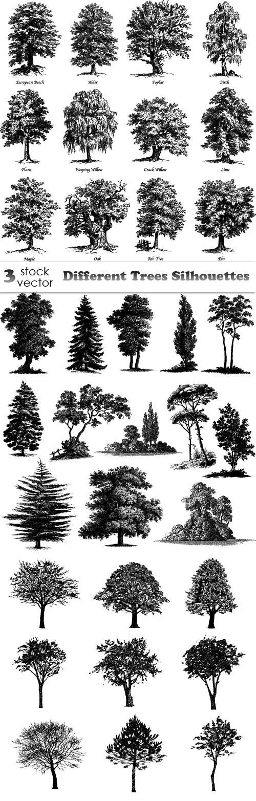 Vectors - Different Trees Silhouettes