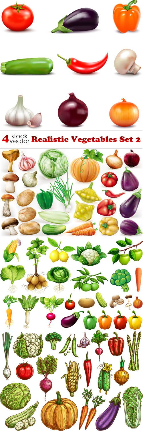Vectors - Realistic Vegetables Set 2