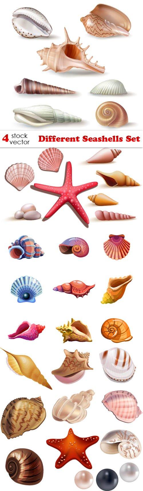Vectors - Different Seashells Set