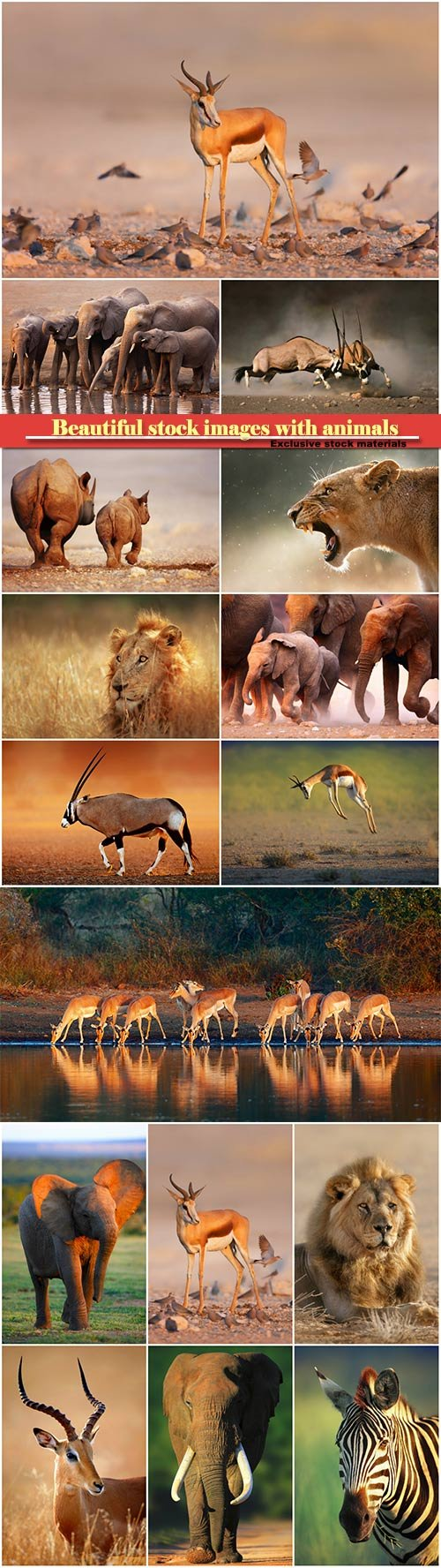 Beautiful stock images with animals, elephants, lion, zebra