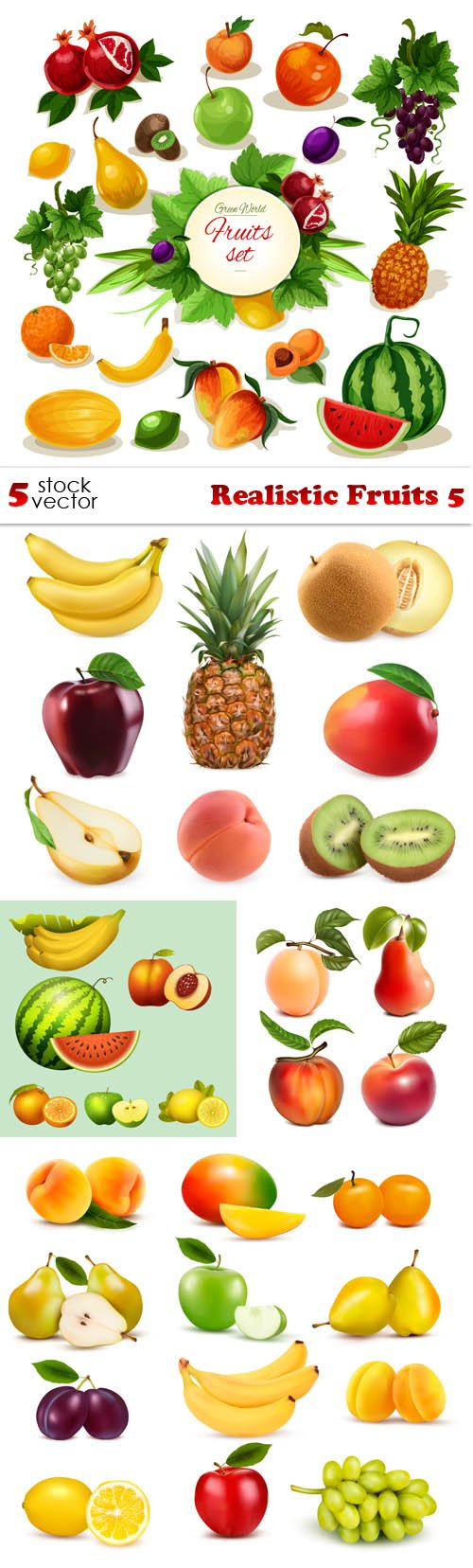 Vectors - Realistic Fruits 5