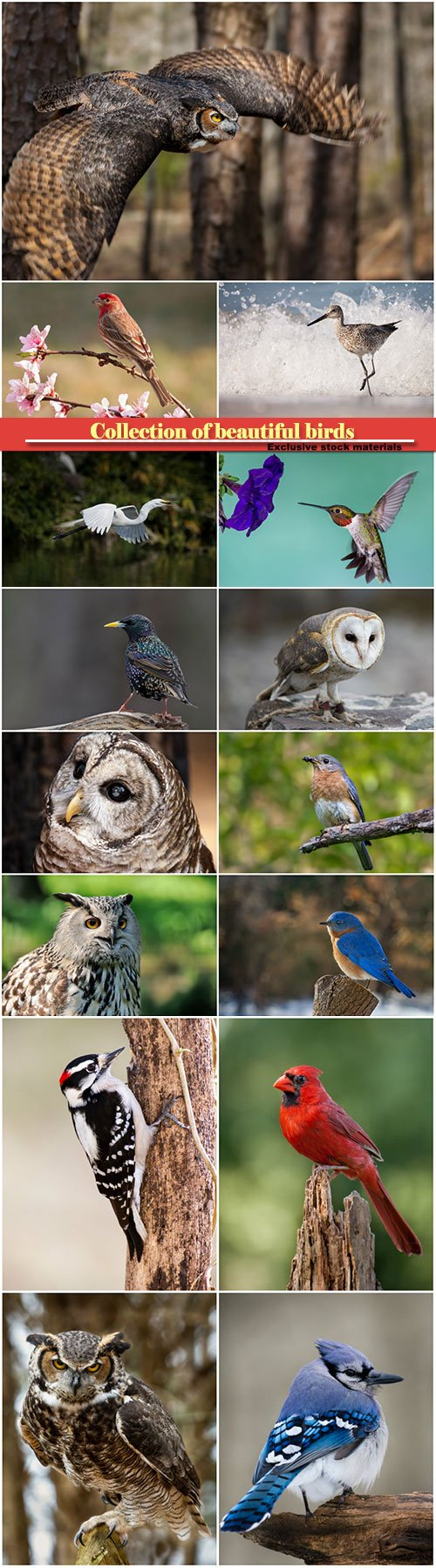 Collection of beautiful birds
