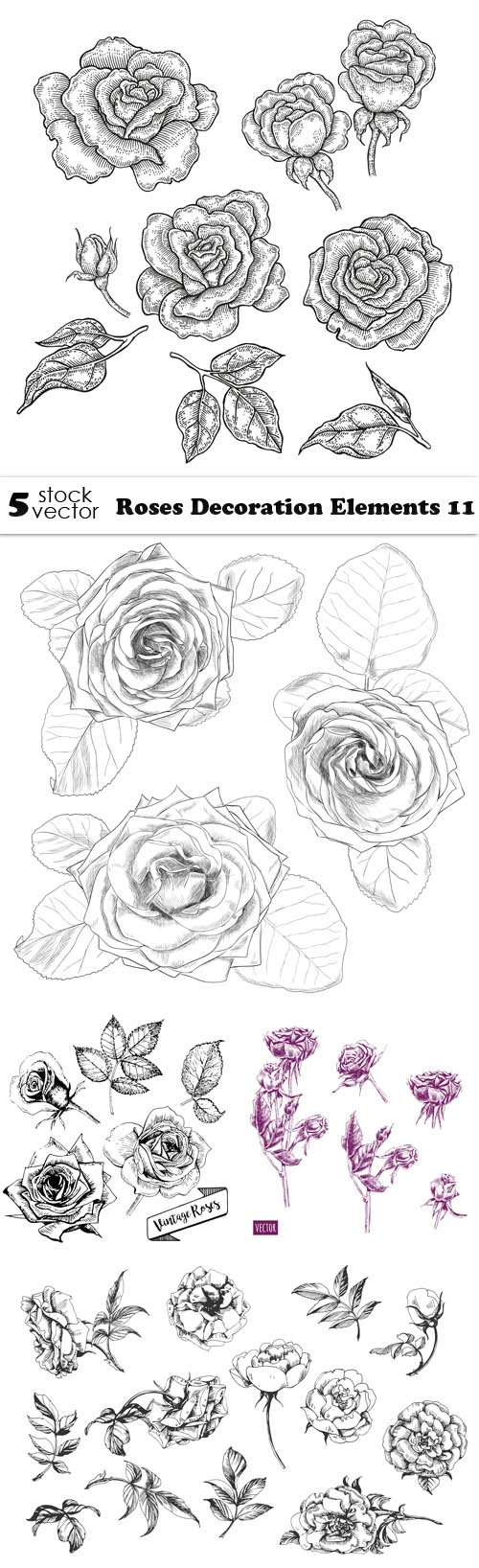 Vectors - Roses Decoration Elements 11
