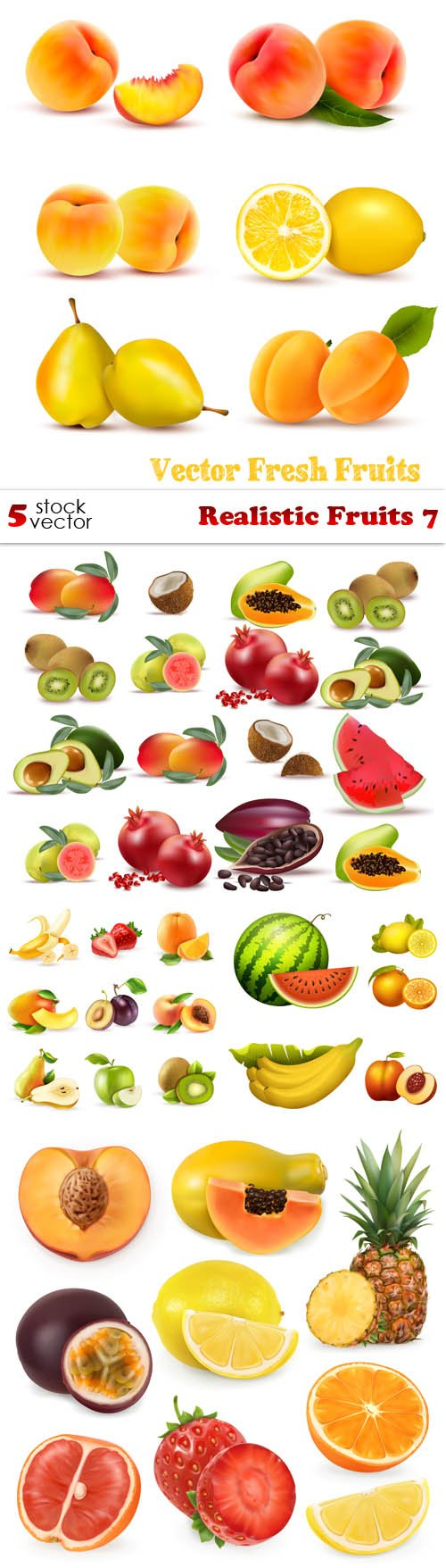 Vectors - Realistic Fruits 7