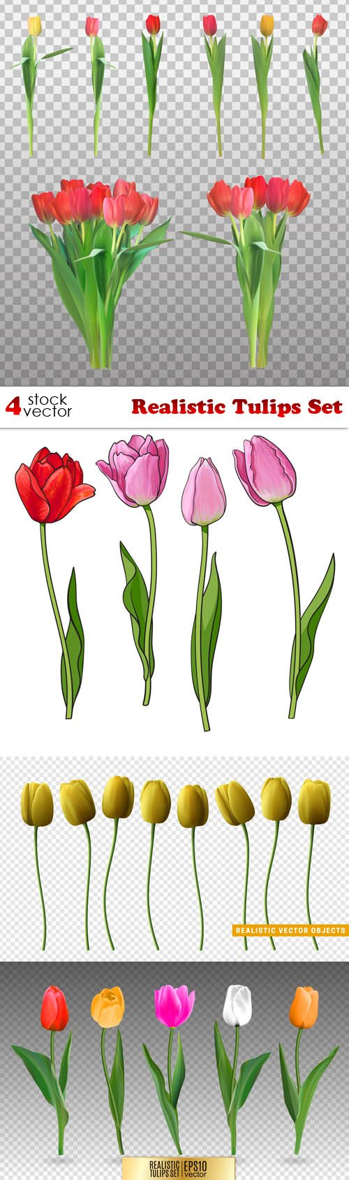 Vectors - Realistic Tulips Set