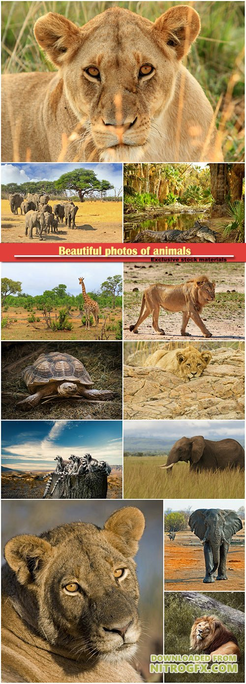 Beautiful photos of animals, elephant, lion, crocodile, turtle, giraffe