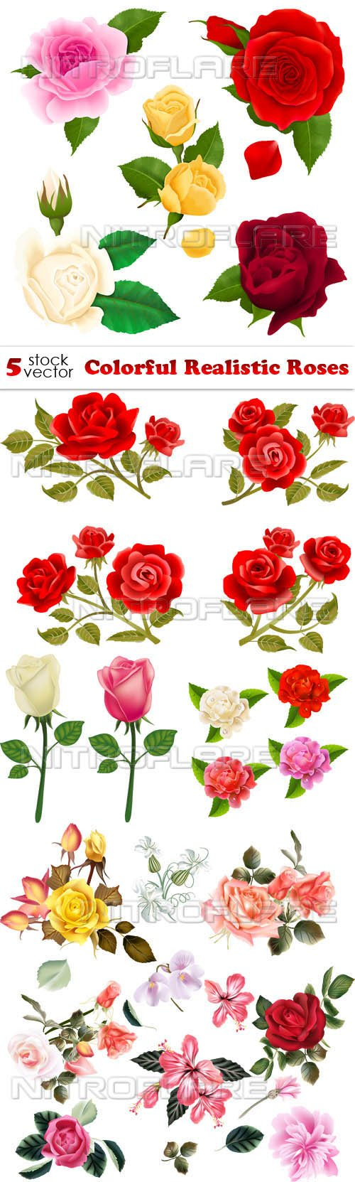 Vectors - Colorful Realistic Roses