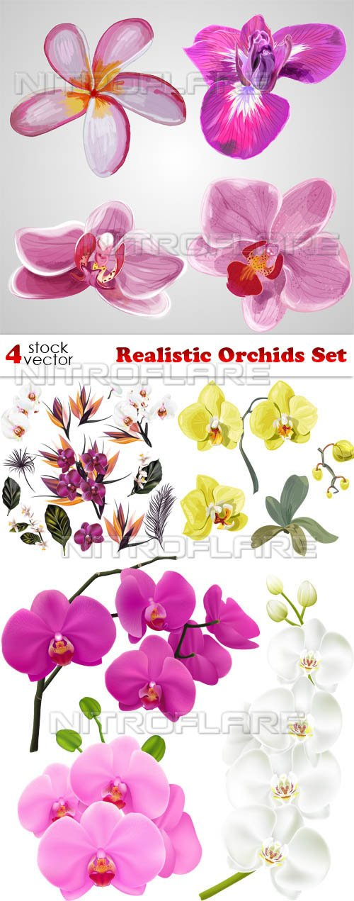 Vectors - Realistic Orchids Set
