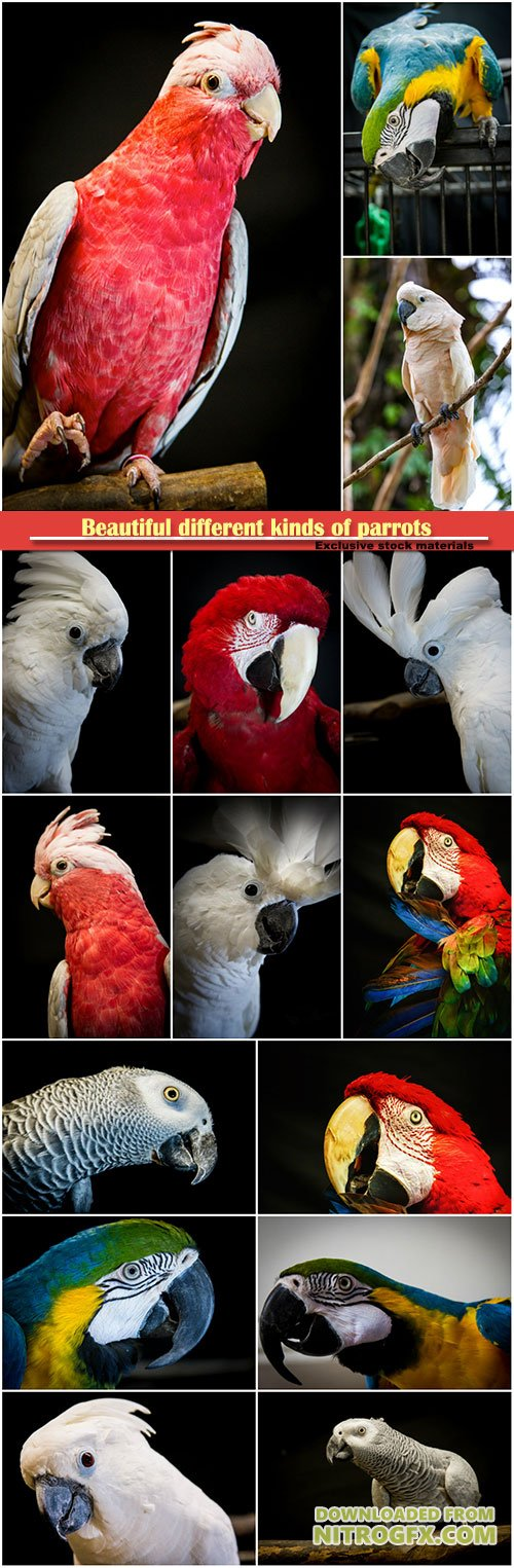 Beautiful different kinds of parrots