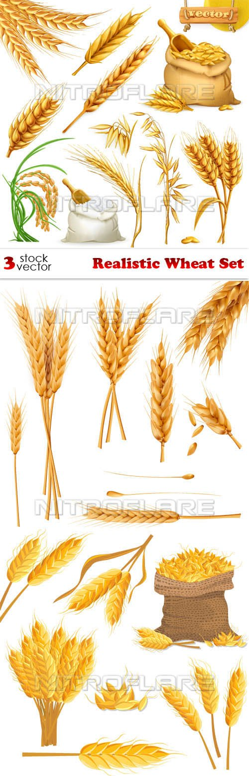 Vectors - Realistic Wheat Set