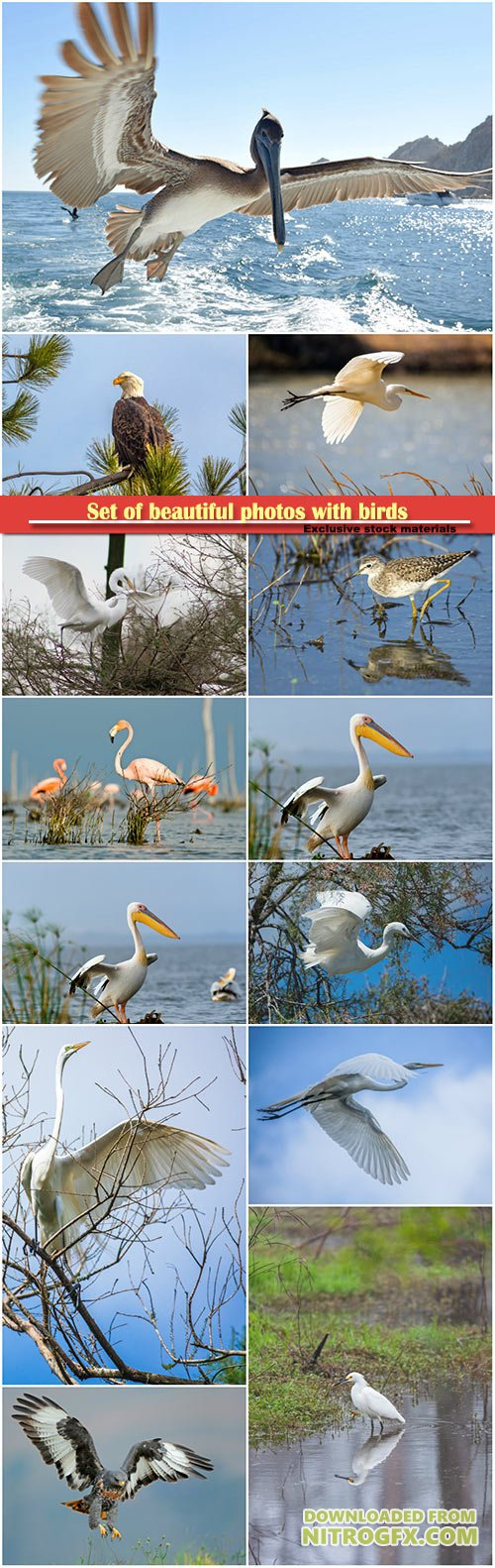 Set of beautiful photos with birds