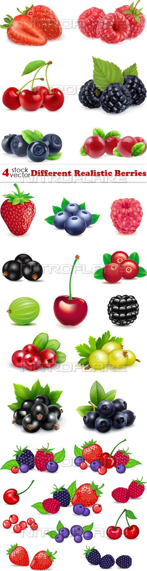 Vectors - Different Realistic Berries