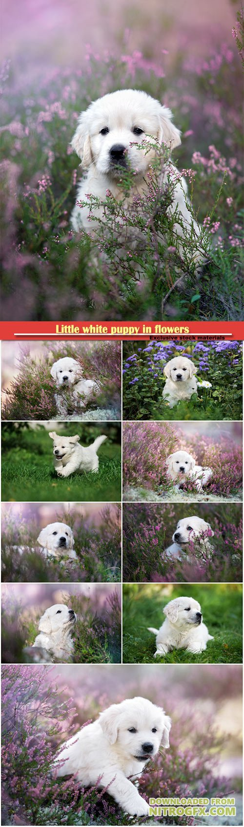 Little white puppy in flowers