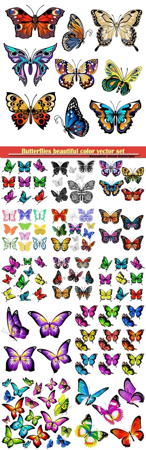 Butterflies beautiful color vector set