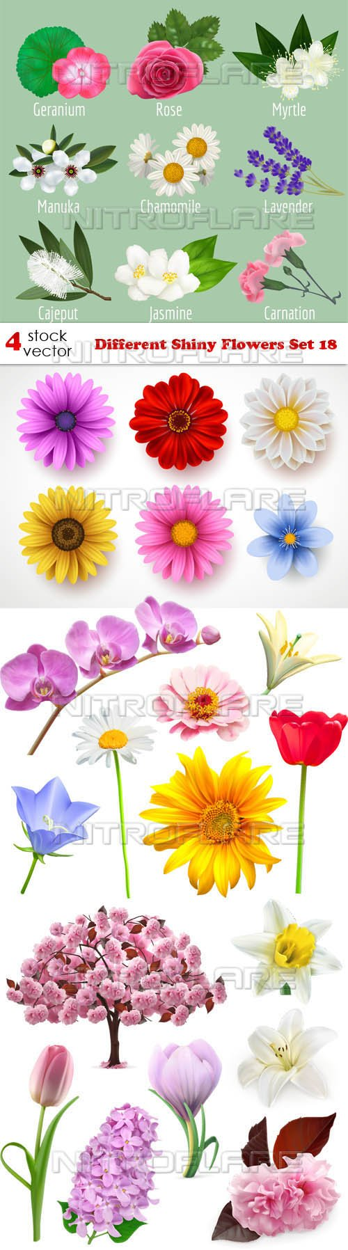 Vectors - Different Shiny Flowers Set 18