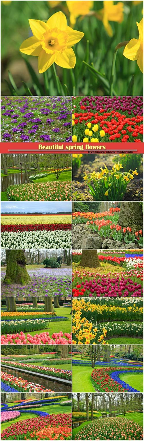 Beautiful spring flowers, daffodils, tulips