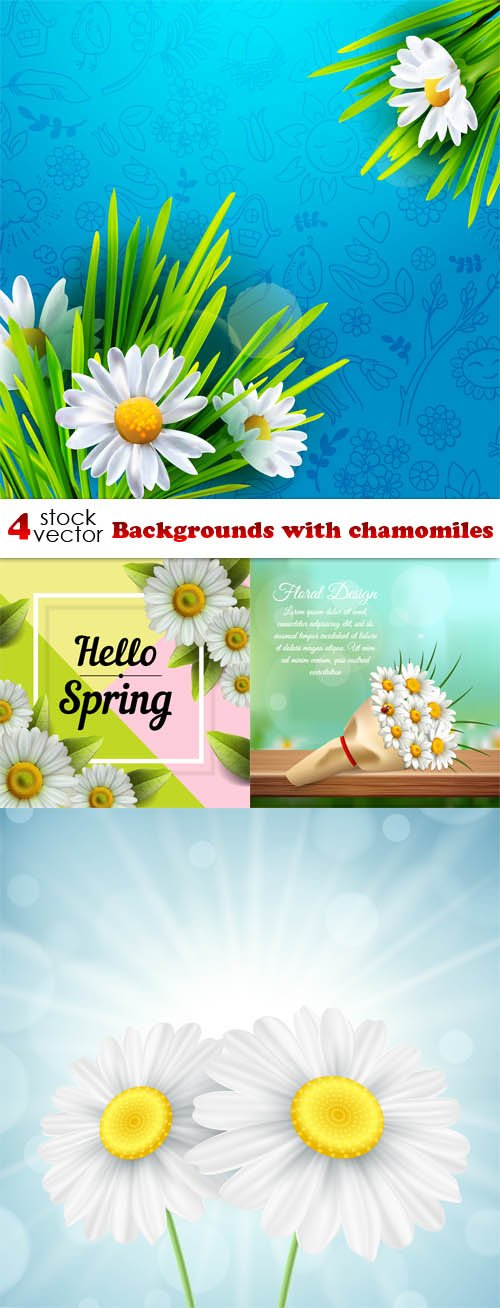Vectors - Backgrounds with chamomiles
