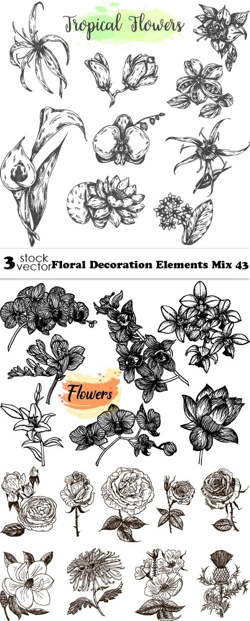 Vectors - Floral Decoration Elements Mix 43
