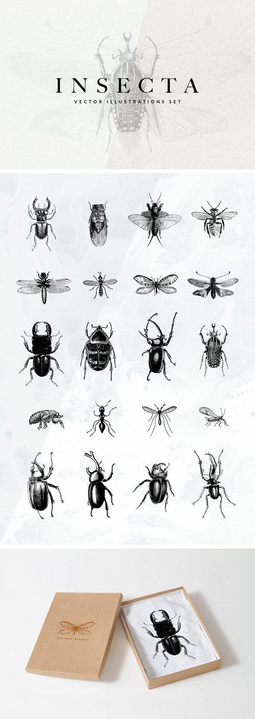 20 Insecta Vector Illustrations Set