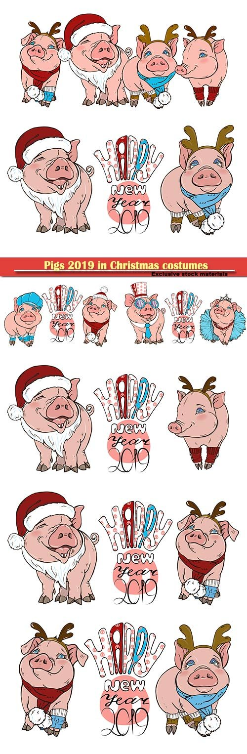 Pigs 2019 in Christmas costumes, vector illustration