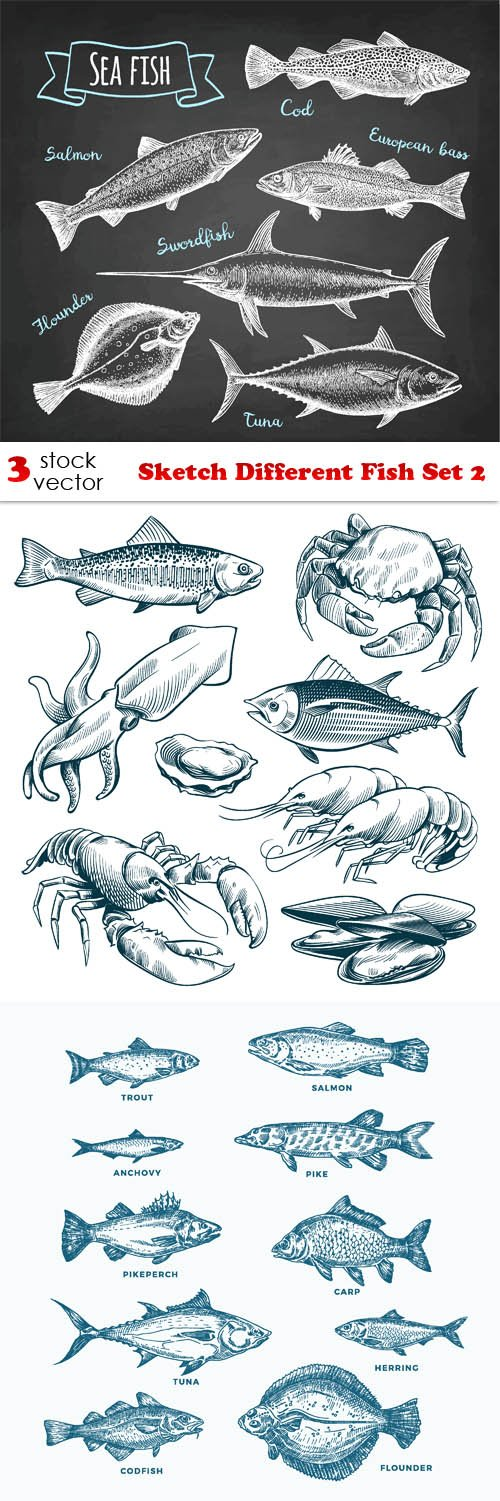 Vectors - Sketch Different Fish Set 2