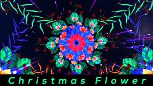 Christmas Flower 22955077