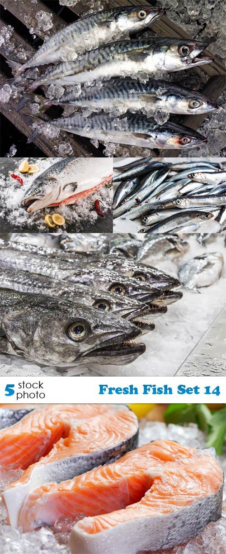 Photos - Fresh Fish Set 14