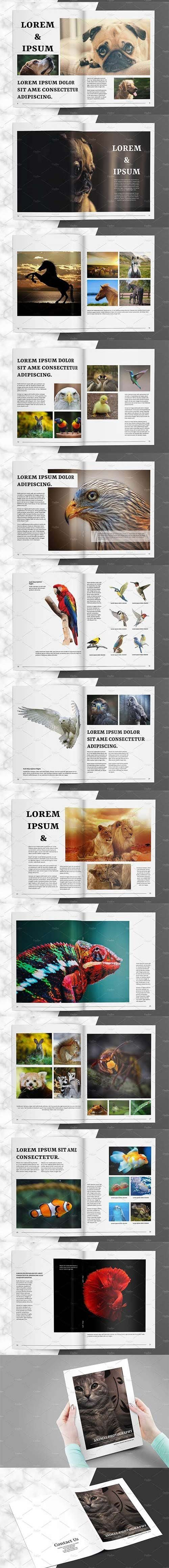 CreativeMarket - Animal Photography Brochure V827 3025271