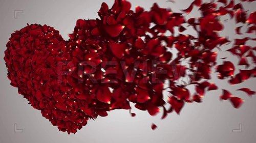 MA - Heart Rose Petals Message Reveal 131932