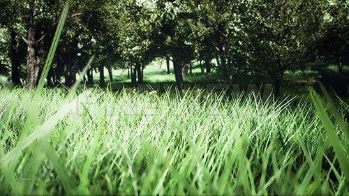 MA - Exploring A Green Park 133738