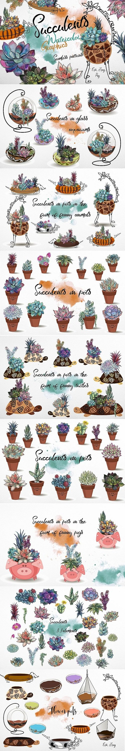 Succulents. Watercolor. Graphics - 173334