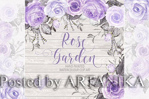 Watercolor purple roses design