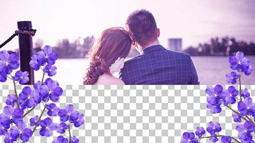 Purple Orchid 01 20507860