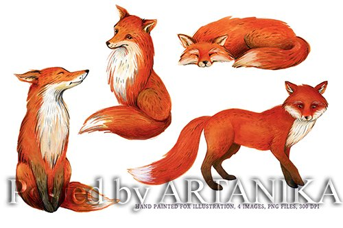 Fox Illustration Watercolor