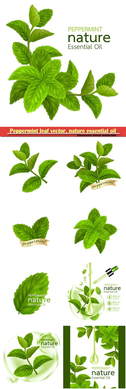 Peppermint leaf vector, nature essential oil