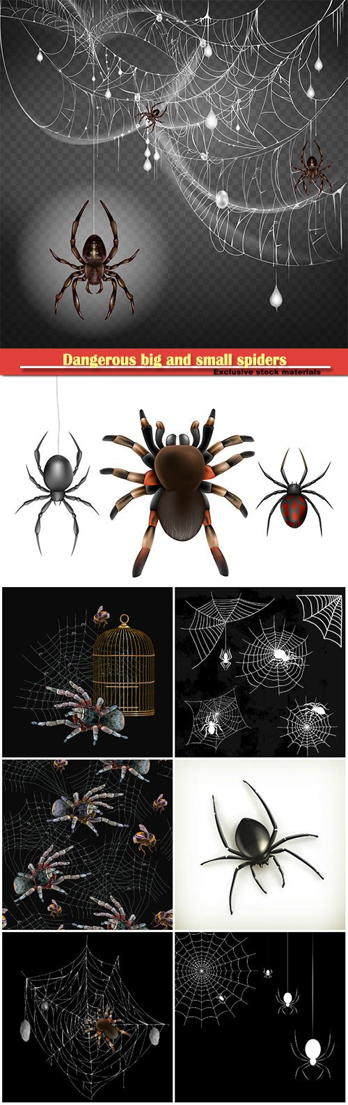 Dangerous, poisonous big and small spiders hanging on thin web string in 3d realistic vector illustration