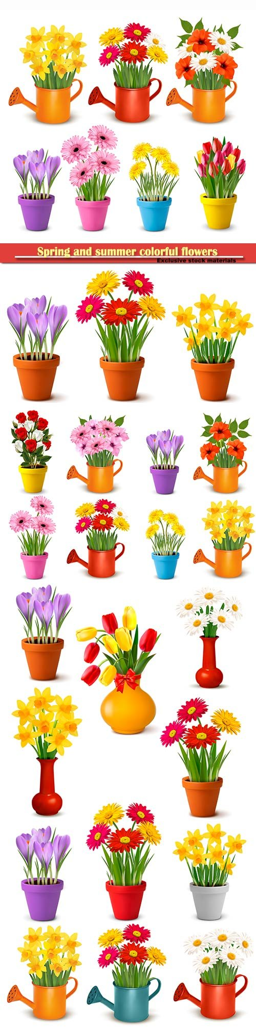 Spring and summer colorful flowers in pots