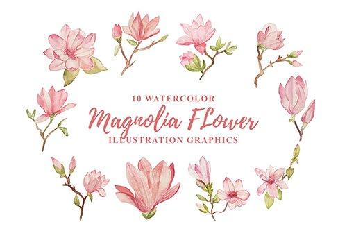 10 Watercolor Magnolia Flower Illustration Graphic