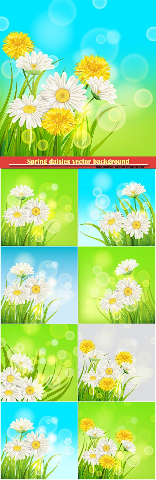 Spring daisies background fresh green grass vector card