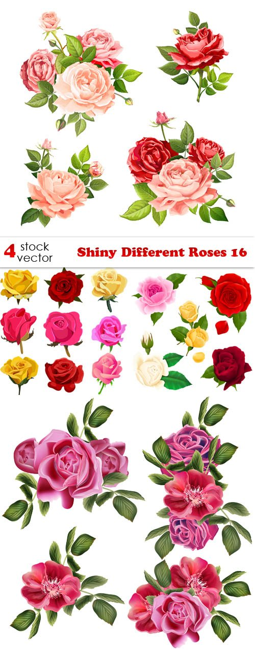 Vectors - Shiny Different Roses 16