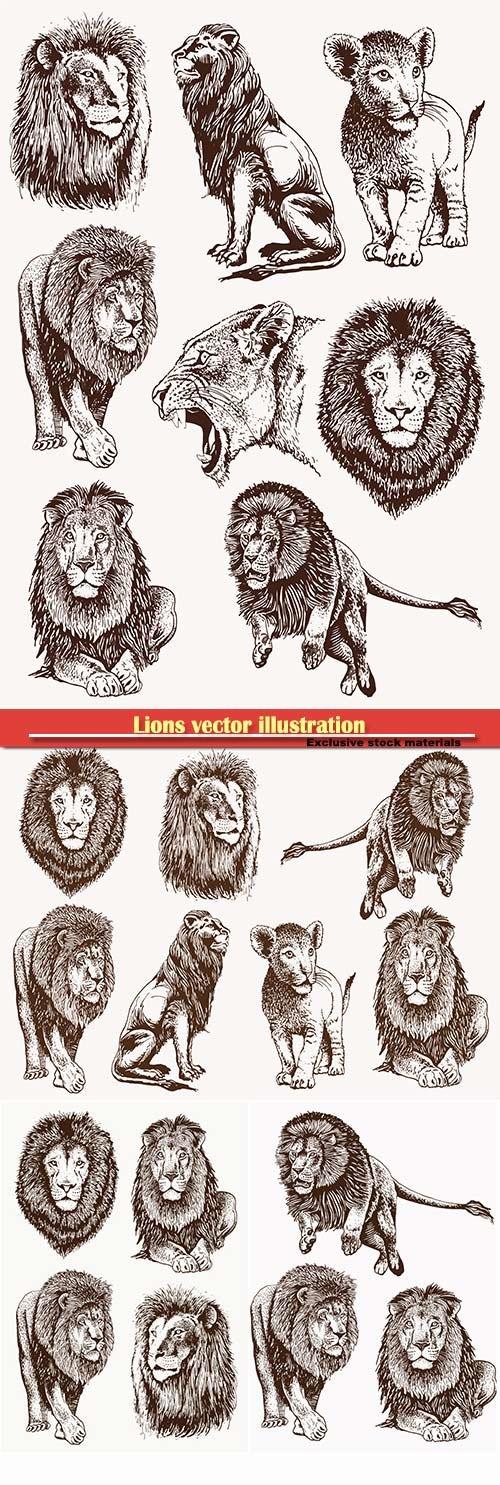 Lions vector illustration