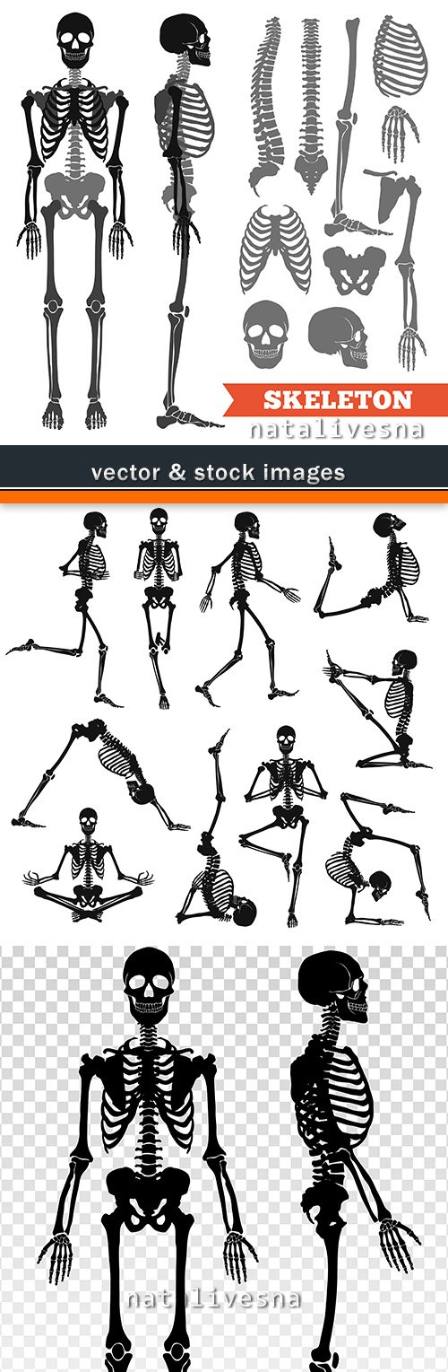 Skeleton black silhouette anatomy structure of person
