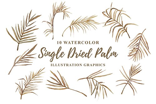 10 Watercolor Single Dried Palm Illustration