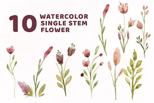 10 Watercolor Single Stem Flower Illustration