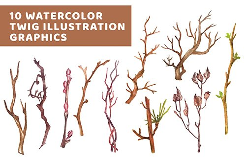 10 Watercolor Twig Illustration Graphics