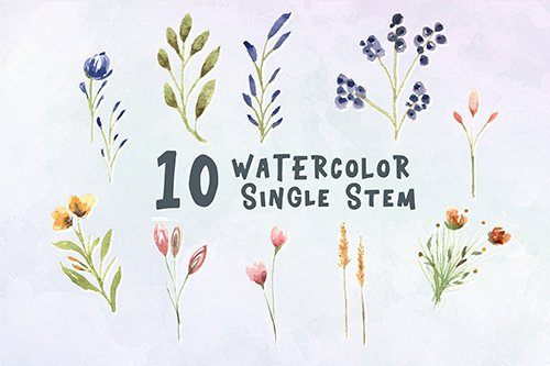 10 Watercolor Single Stem Illustration Graphics