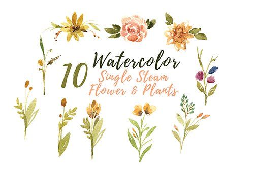 10 Watercolor Single Stem Flower and Plants