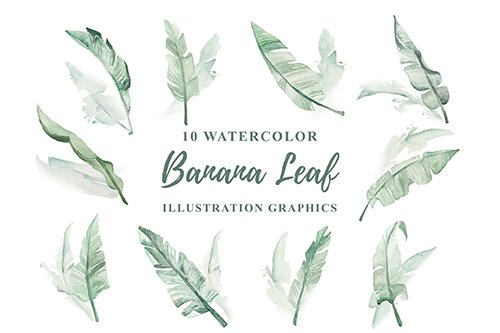 10 Watercolor Banana Leaf Illustration Graphics