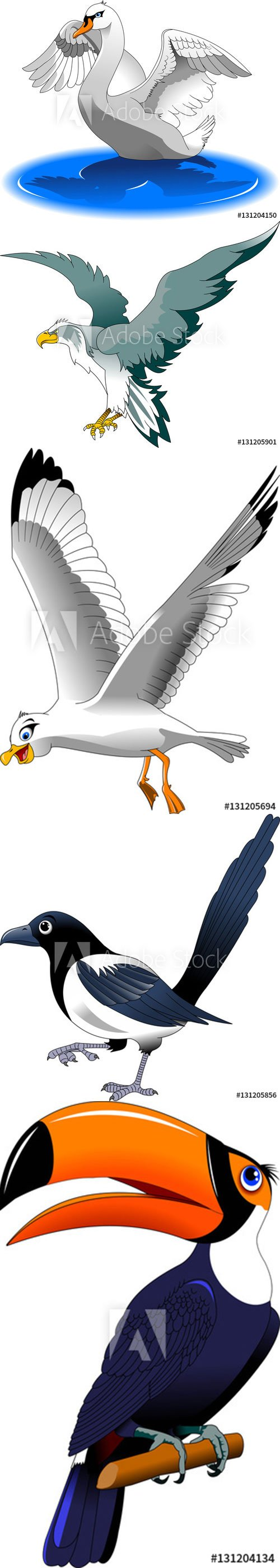 Collection of beautiful birds in a vector and illustration